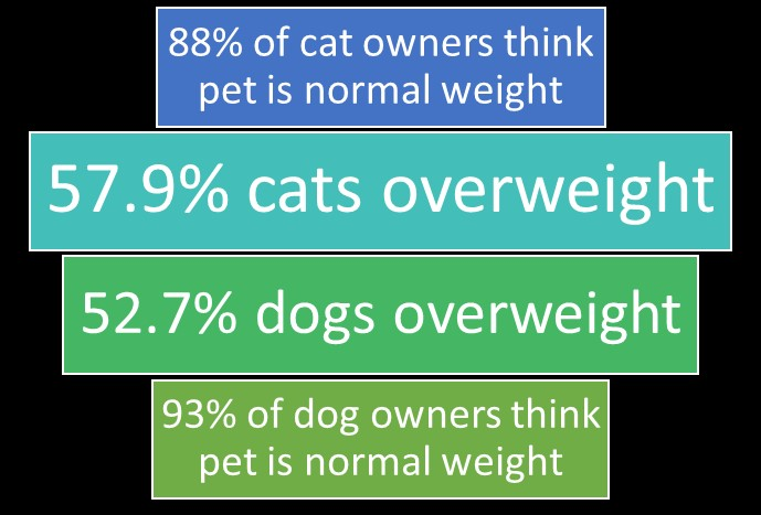 Pet Obesity Goes Unnoticed