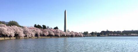 (Cherry) Blossom into Spring