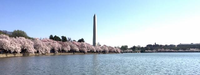 %28Cherry%29+Blossom+into+Spring