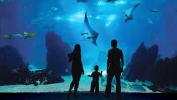 A family enjoys the wildlife at the Virginia Aquarium and Marine Science Center.